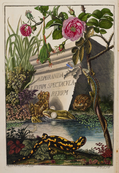 Historia naturalis ranarum nostratium (Natural history of the native frogs) by 18th-century German naturalist August Johann Rösel von Rosenhof