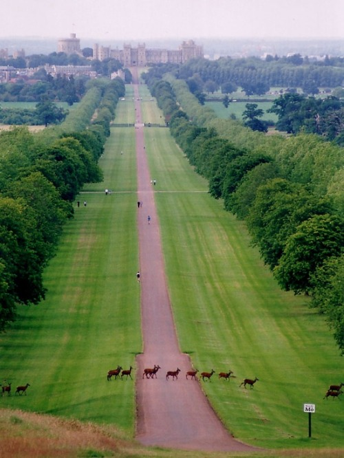find-me-traveling-everywhere:  Windsor Castle x  I love the deer crossing the road in a straight line.