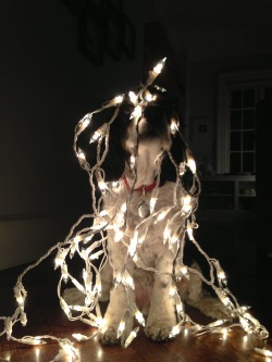 woodythedog:  Why buy a Christmas Tree when you can dress up as one?  Happy Holidays!