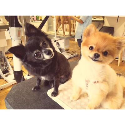 laceyann:  SmallDog went to @spaw_boutique and made a new friend.
