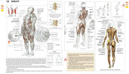 hellyeahyougotthis:  Anatomy of a Deadlift Compound Lifts > Anything