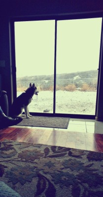 Scarlett watching the snow fall at the in-laws, definitely not in Tucson anymore:(