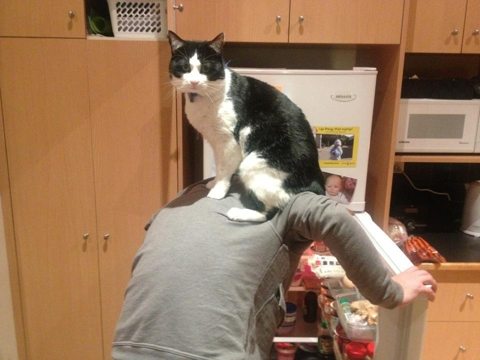Kitchen Helper Photo via imgur