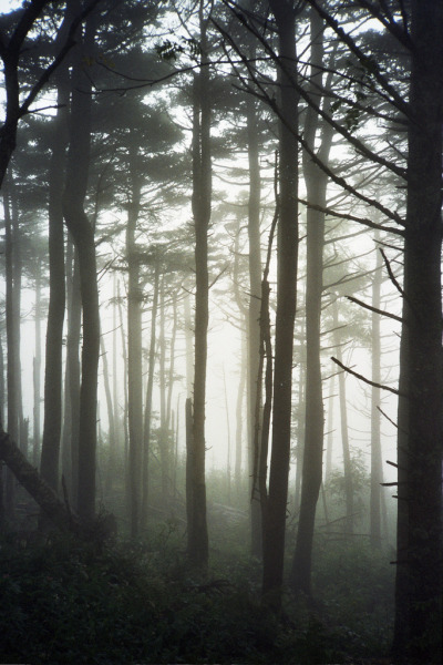night-0wl:  Mt. Mitchell fog (by greglil)