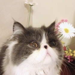 teen-witches:  nong silly #sillythecat#cat