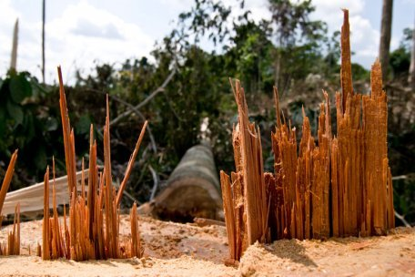 "Deforestation Robs Amazon Soil of Life ""We knew that if you cut the trees, the animals will disappear, but we didn't know what happened to the microbes,"" said Jorge Rodrigues, assistant professor of biology at University of Texas at Arlington and leader of the research team. ""We showed for the first time, in the case of the Amazon, you would see losses of microbe species when moving land use from the forest to the pasture."""