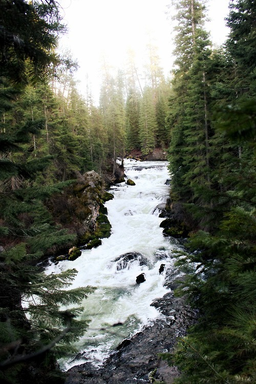 onehundredakerwood:  Into the Wild