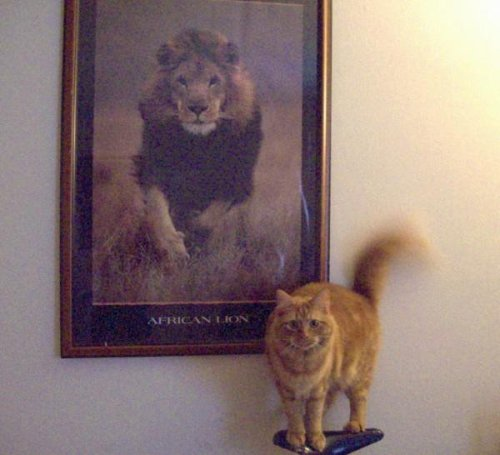 cat please get down. no you do not look anything like him. you are not scary like that lion.