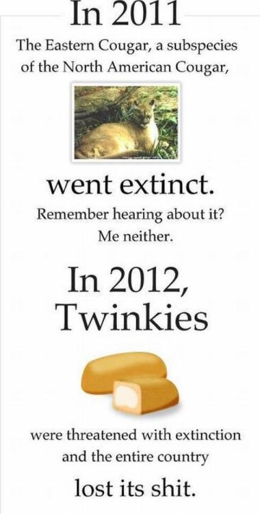"danton-damnark:  datcatwhatcameback:  funfrom4chan:  Twinkies  Murrica  Oh no. A fucking sub-species of dangerous cats went extinct. Who cares?  Pot stirrers. http://www.fws.gov/northeast/ECougar/newsreleasefinal.html ""Although the eastern cougar has been on the endangered species list since 1973, its existence has long been questioned. The U.S. Fish and Wildlife Service (Service) conducted a formal review of the available information and, in a report issued today, concludes the eastern cougar is extinct and recommends the subspecies be removed from the endangered species list.""""the Service's lead scientist for the eastern cougar, the subspecies of eastern cougar has likely been extinct since the 1930s.""Let's raise a stink about a sub-species that might not have even existed. It didn't ""go extinct in 2011"" that's just when it was removed from the registry and officially declared as being extinct. However its likely that it had gone extinct well before it was even put onto the list."