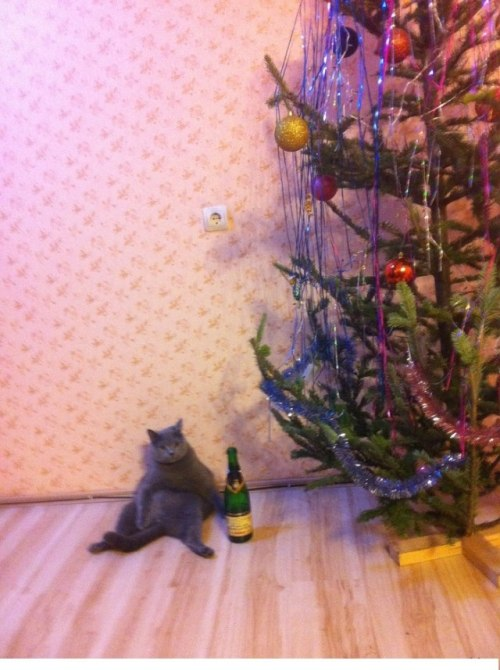 "theclearlydope:  ""Come and make me take down my Christmas tree."" - Still drunk from the holidays cat"