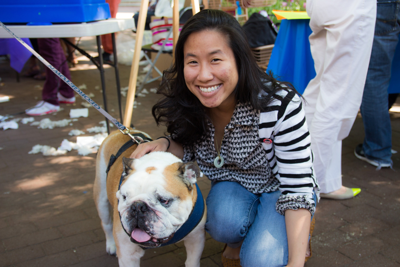 Yesterday's highlight: I met Jack the Bulldog during Georgetown Day! :))