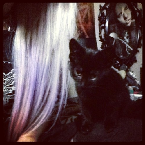 I have the cutest kitten ever 💜🙈