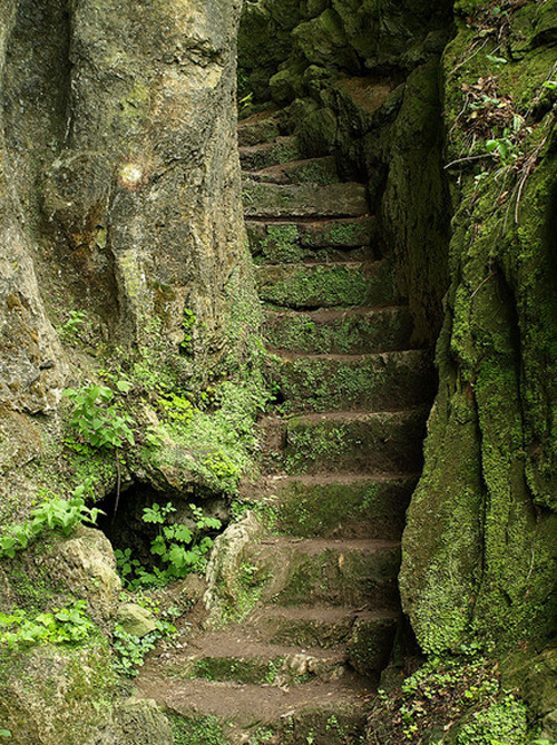 justrebellion:   mossy stairs on Flickr