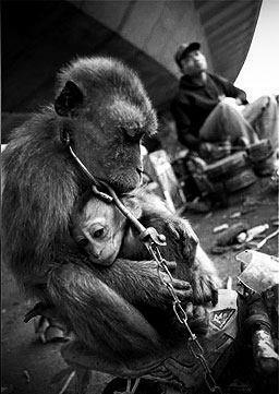 A mother and child. Chained. Terrified. Abused and made to suffer. To those out there looking upon us activists as terrorists, why arent you instead, looking upon this as terrorism? The baby's face is heartbreaking.