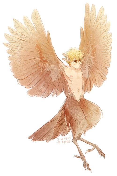junebirds:  More harpy England *v* Wanted to see how he'd look minus the robin markings I drew on him last time!