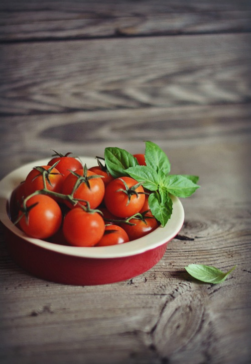 photoholic:  tomatoes … (by sonja-ksu)