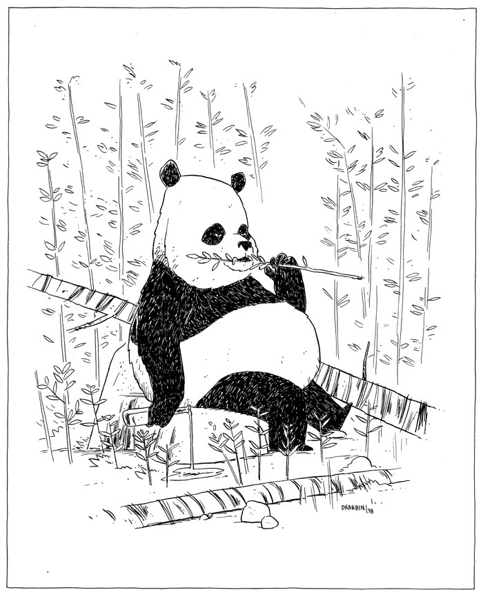 "GRUMPY PANDA. An ""Hour Drawing,"" available to purchase here, and the 200+ set of them so far here. Subject suggestion for this one was ""grumpy panda"".  I'll be reopening sales on these drawings, at a slightly increased price, on Monday, May 6. So if you've been waiting, get ready—in order to control demand (and workload), I'll only be taking 10 orders."