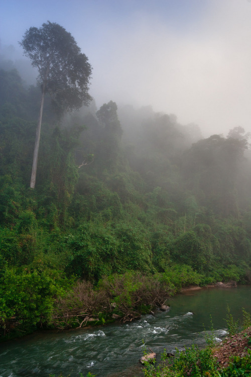 senerii:  Jungle, fog and river on the way to Huai Xay by bm_photo on Flickr.