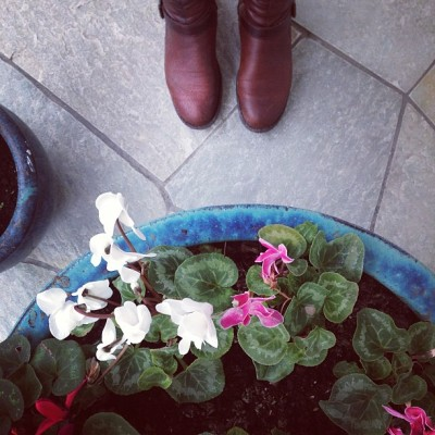 Wednesday is such a tease #fromwhereistand #flowers #feet #boots #lookingdown #colors #winter #garden #vscocam
