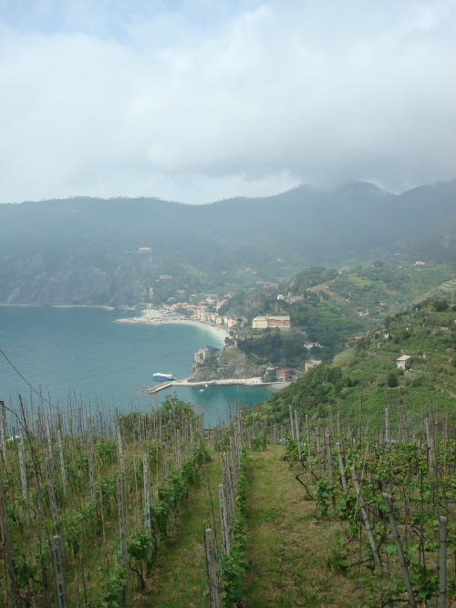 Vineyards and Monterosso al Mare, Cinque Terre, Liguria Italy