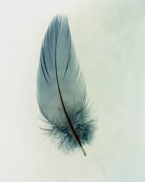 Feathers is a beautiful and simple series of photographs by Taylor Curry. Make sure to visit his complete portfolio, some great work there!