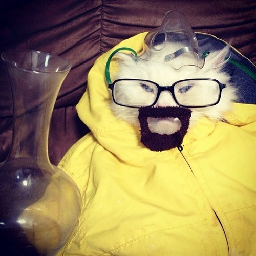guyswithglasses:  Respect the Chemistry, Jesse Hahaha, that poor kitty.