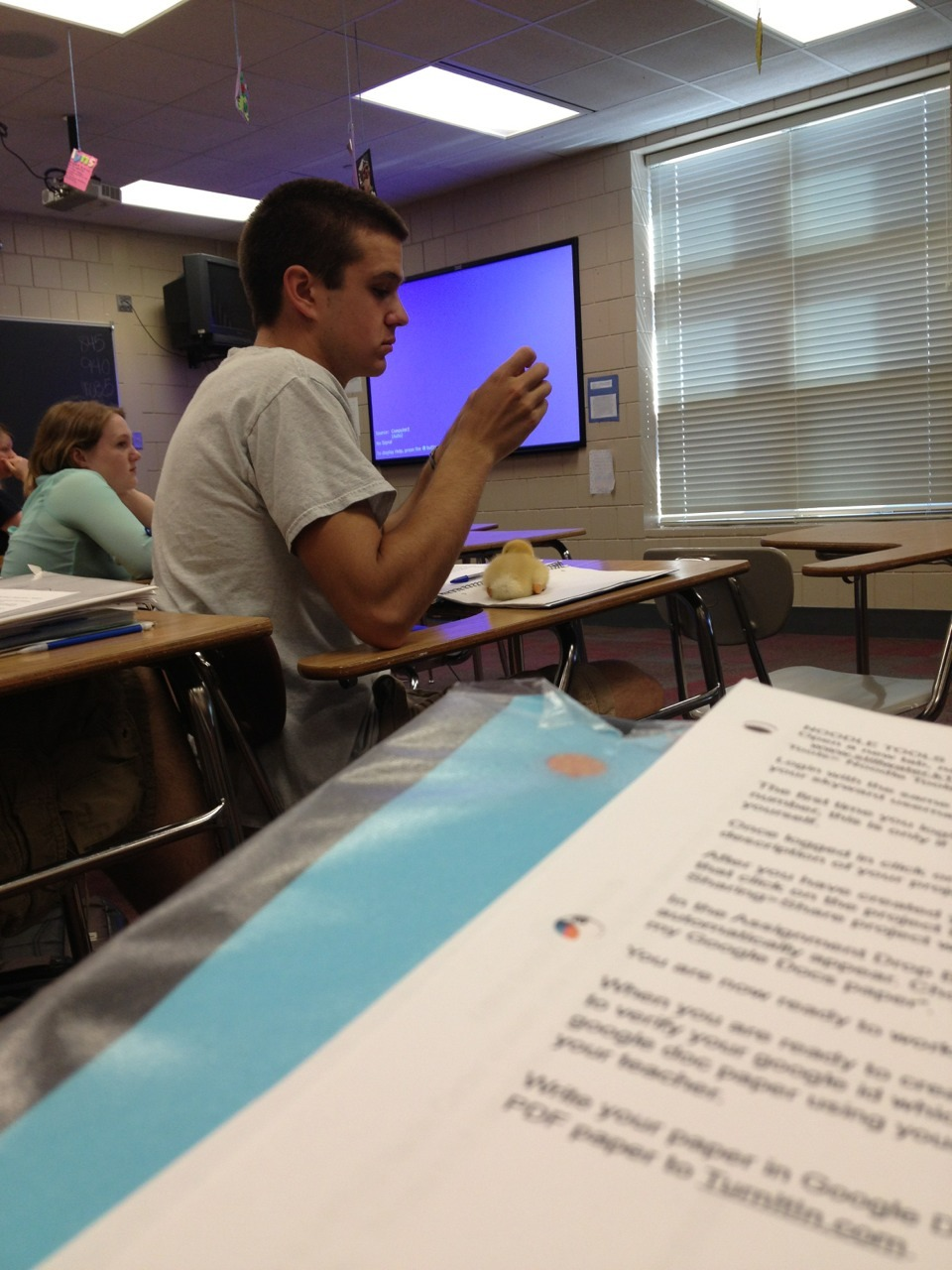 typette:  teenytigress:  SO THIS GUY IN MY ENGLISH IS DOING A PROJECT FOR BIO WHERE HE GETS A DUCKLING TO IMPRINT ON HIM SO HE JUST CARRIES IT AROUND WITH HIM TO ALL OF HIS CLASSES AND I SWEAR THIS DUCK IS THE MOST WELL BEHAVED FUCKING POULTRY IVE EVER SEEN IT JUST SITS ON HIS DESK QUIETLY AND SOMETIMES HE PUTS IT IN HIS POCKET AND IT JUST SLEEPS LIKE WOW YOU GO DUCKY  AAAWWWW holycrap that's fucking adorable, look at it, it's like a little yellow blob of cute