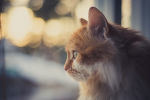 photogenicfelines:  (netzanette)