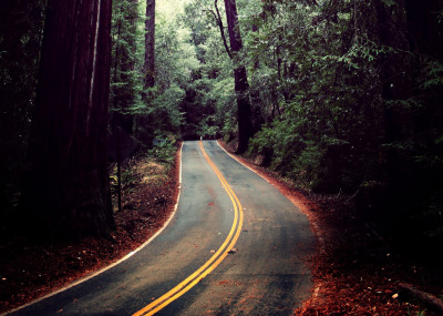 definitelydope:  Carretera entre las sequoias (by Javi S&M)
