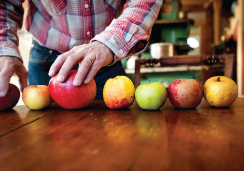 Why Your Supermarket Only Sells 5 Kinds of Apples Meet John Bunker. He wants to bring back the thousands of apple varieties that made American great.