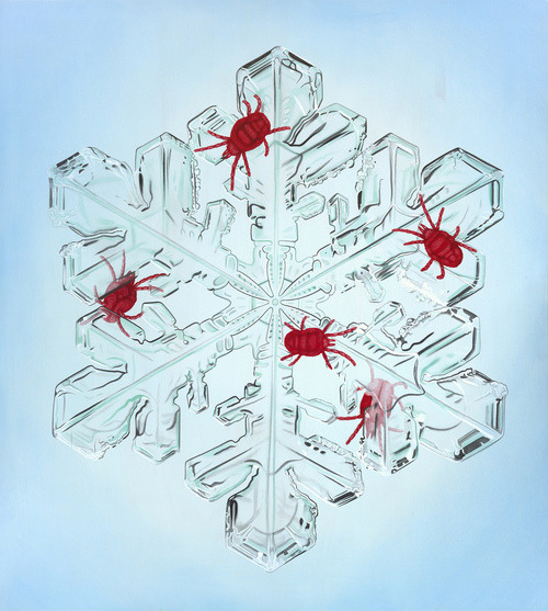 Velvet Mites on a Snowflake by Tiffany Bozic