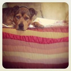 Lounging with Lydia. Have you LIKED her adoption page yet? Check it out: http://www.facebook.com/AdoptLydia