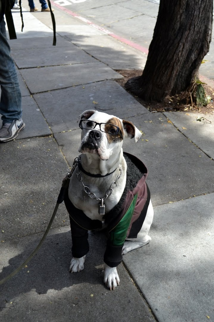 itssigh-worthy:  Another homeless man's dog.