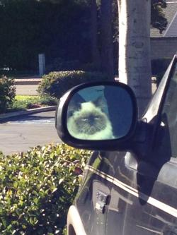 theclearlydope:  Cat on a stakeout. I imagine.