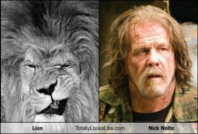 celebritycafe:  Lion Totally Looks Like Nick Noltehttp://celebritycafe.tumblr.com/