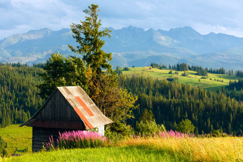 The meadows of Poland are just stunning!