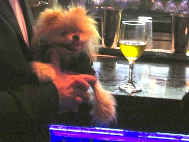 Giggy, step away from the wine!