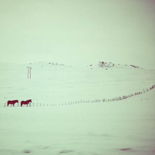 Two horses (Northern Iceland. Gustavo Thomas © 2013) on Flickr.