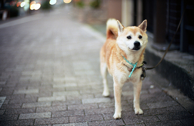 animalgazing:  where is my owner? :( by TAT_hase! on Flickr.