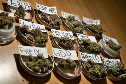 crystalbud:  incredible-kush:  Strain testing anyone?  ^ yes