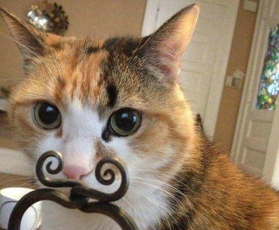 """Finger mustaches are so mainstream… So I use metal mustaches."" Photo via Calico Cats"