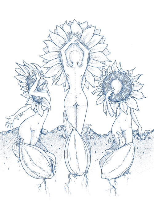 eatsleepdraw:  I've been growing some little sunflowers lately and I love watching how they bloom. DA| ETSY