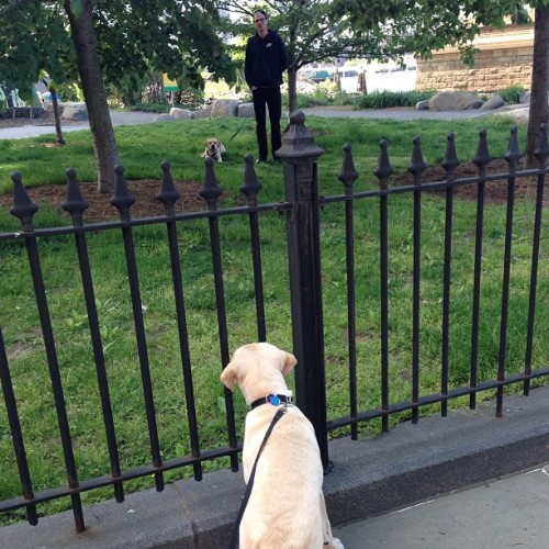 """Indy is that you? Why the heck is there a fence between us?"" - #ThisIsScooter (at Brooklyn Bridge Park)"