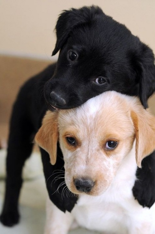 """""""Hi, mum,"""" said Black Puppy, nervously nudging White Puppy forwards. """"I know what you said about dating puppies who aren't the same colour as me. Other people don't always understand, and I get how that can make it difficult. But, mum… please be on our side. This is White Puppy. She's my girlfriend."""" Black Puppy's mother looked at the two young dogs in front of her, and watched as her son slid his dark paws around White Puppy's shoulders and they gazed back at her, hopeful. She didn't have anything against dogs who weren't black, but she didn't want her son's life to be any more difficult than it had to be. She was afraid that other people would make it so if he was dating White Puppy. Black Puppy saw his mum's hesitation. """"I love her,"""" he said, his bark almost a whisper. Black Puppy's mother's mind was made up. She reached out and drew Black Puppy and White Puppy into a warm hug."""