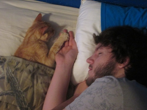 fuckyeasleeping:  Cat naps, made better with cats.