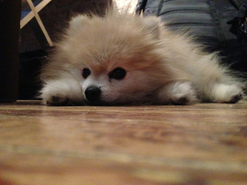 tommypom:  Waiting patiently for Friday.  This, is absolutely precious.