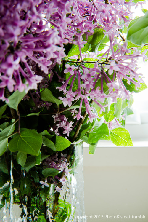 At the kitchen window…boomerang lilacs.