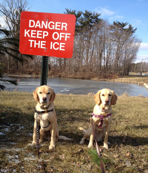 Public Service Announcement by Stanley & Stella - DANGER KEEP OFF THE ICE
