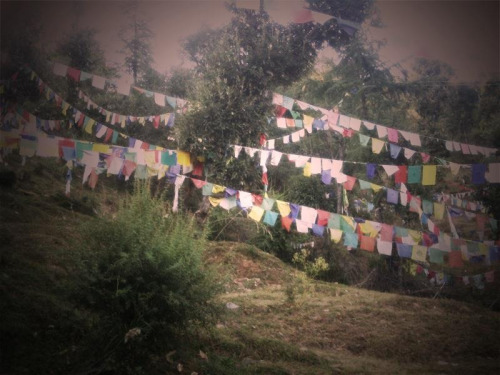 wild-wolves:  Dharmsala, India.