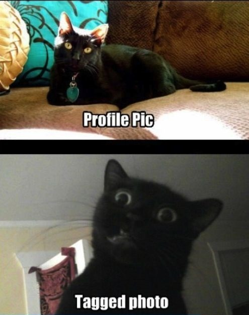 catsbeaversandducks:  The truth about Facebook pictures. Via ActionBash